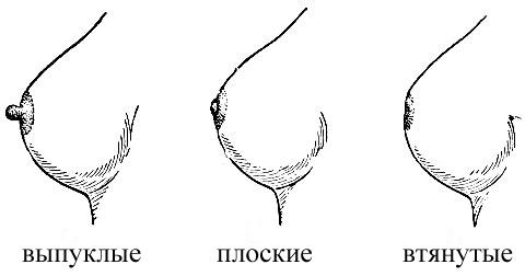 фото сосков необычных форм у женщин